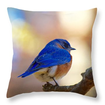 Throw Pillow featuring the photograph Eastern Bluebird by Robert L Jackson