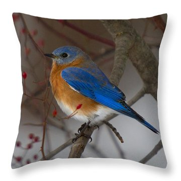 Eastern Bluebird Throw Pillow by Timothy McIntyre