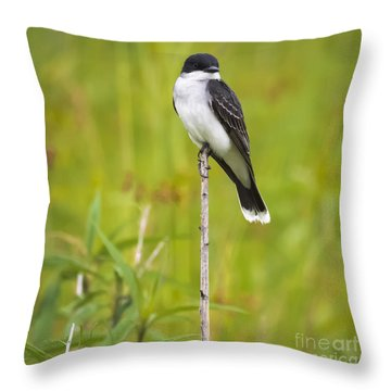 Throw Pillow featuring the photograph Eastern Kingbird  by Ricky L Jones