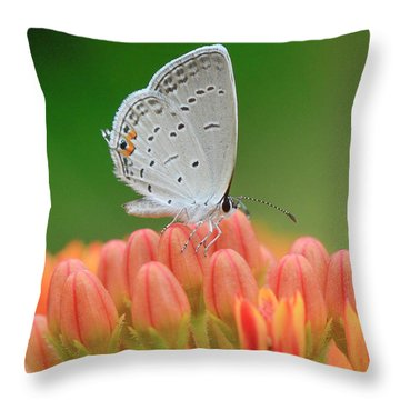 Eastern Tailed Blue On Butterfly Weed Throw Pillow