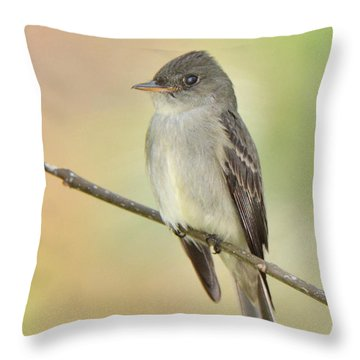 Eastern Wood-peewee Throw Pillow by Alan Lenk