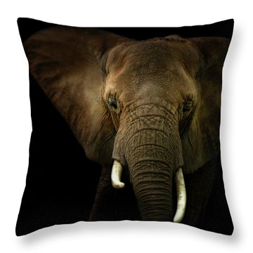 Elephant Against Black Background Throw Pillow