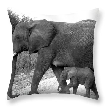 Elephant Walk Black And White  Throw Pillow