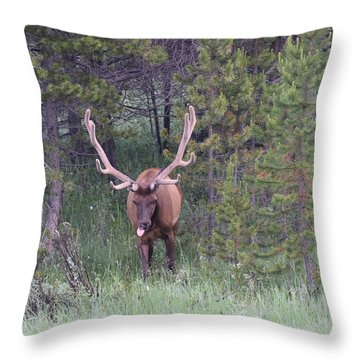 Bull Elk Rocky Mountain Np Co Throw Pillow
