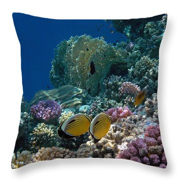 Exquisite Butterflyfish In The Red Sea Throw Pillow