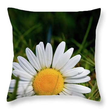 Throw Pillow featuring the photograph Fallen Daisy by Scott Holmes