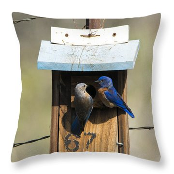 Family Time Throw Pillow by Mike Dawson