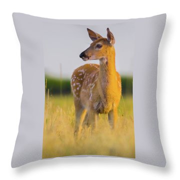 Throw Pillow featuring the photograph Fawn In Sunlight by John De Bord