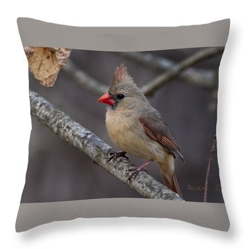 Female Cardinal Throw Pillow by Diane Giurco