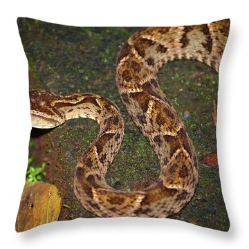 Fer-de-lance, Bothrops Asper Throw Pillow
