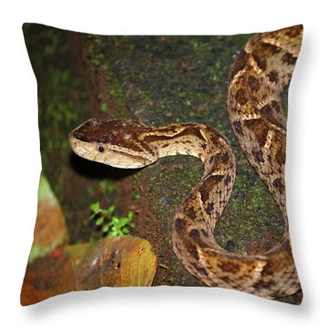 Throw Pillow featuring the photograph Fer-de-lance, Bothrops Asper by Breck Bartholomew