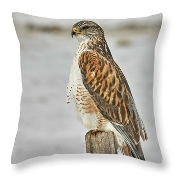 Ferruginous Hawk Throw Pillow by Doug Herr