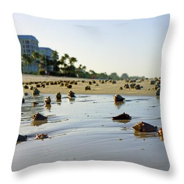 Fighting Conchs On The Beach In Naples, Fl Throw Pillow