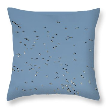 Flock Of Beautiful Migratory Lapwing Birds In Clear Winter Sky Throw Pillow