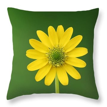 Flower Throw Pillow by Bess Hamiti