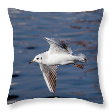 Flying Gull Above Water Throw Pillow by Michal Boubin