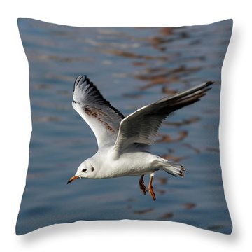 Flying Gull Throw Pillow by Michal Boubin
