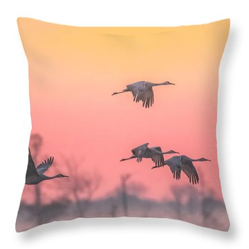 Flying Into The Light And Fog Throw Pillow by Kelly Marquardt