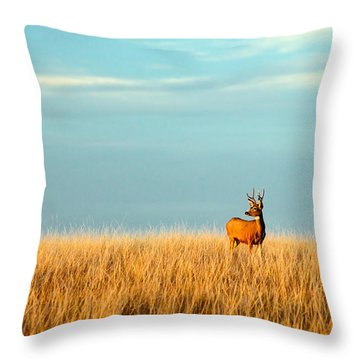 Fort Peck Buck Throw Pillow