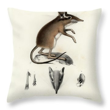 Throw Pillow featuring the drawing Four-toed Elephant Shrew by J D L Franz Wagner