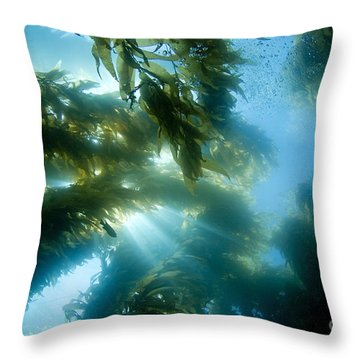 Giant Kelp Forest Throw Pillow by Dave Fleetham - Printscapes