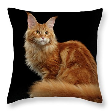 Ginger Maine Coon Cat Isolated On Black Background Throw Pillow