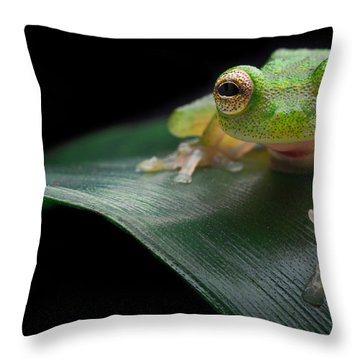glass frog Amazon forest Throw Pillow