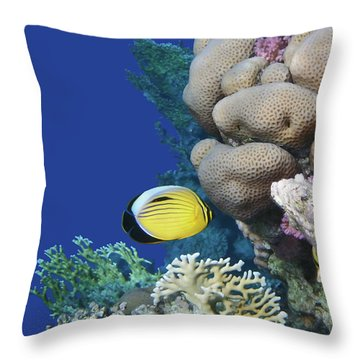 Glorious Red Sea World 3 Throw Pillow