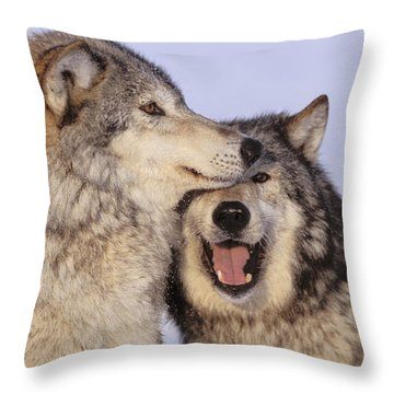 Gray Wolves Throw Pillow by John Hyde - Printscapes