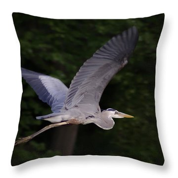 Great Blue Heron In Flight Throw Pillow by Brian Wallace