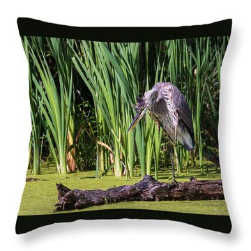 Great Blue Heron Itch Throw Pillow by Edward Peterson