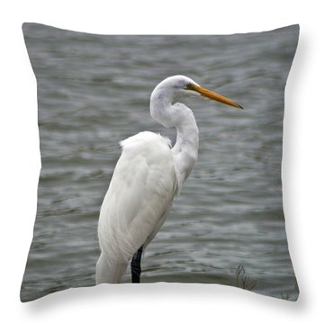 Throw Pillow featuring the photograph Great Egret by Bill Barber