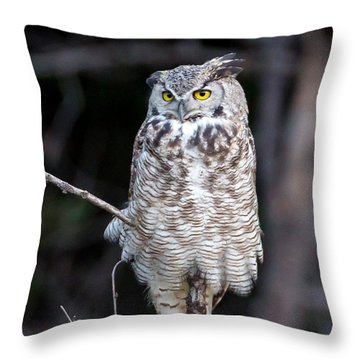 Great Horned Owl  Throw Pillow by Jack Bell