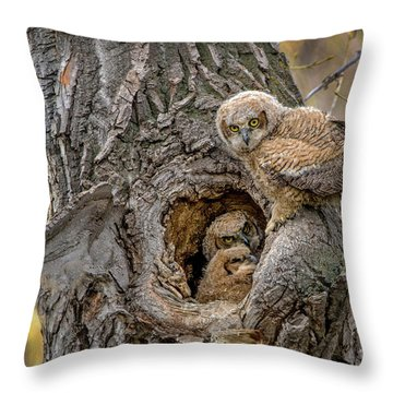 Great Horned Owlets In A Nest Throw Pillow