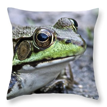 Green Frog Throw Pillow by Michael Peychich