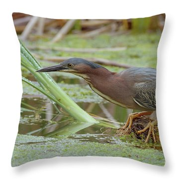 Green Heron Throw Pillow by Doug Herr
