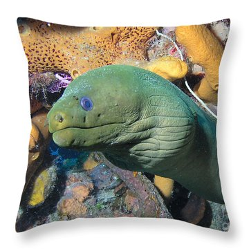Green Moray Eel On Caribbean Reef Throw Pillow