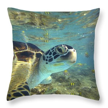 Green Sea Turtle Balicasag Island Throw Pillow