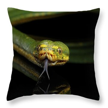 Green Tree Python. Morelia Viridis. Isolated Black Background Throw Pillow