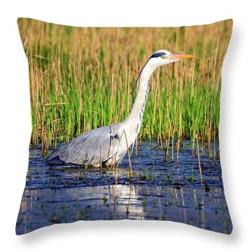 Grey Heron, Ardea Cinerea, In A Pond Throw Pillow by Elenarts - Elena Duvernay photo