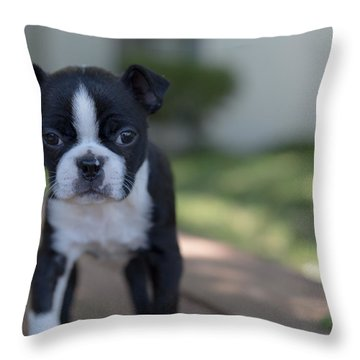 Harley As A Puppy Throw Pillow