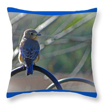 Hello Bluebird Throw Pillow by Judy Wanamaker
