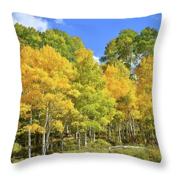 Throw Pillow featuring the photograph High Country Aspens by Ray Mathis