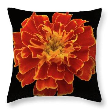 Home Grown Marigold Throw Pillow