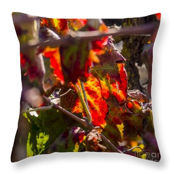 Hot Autumn Colors In The Vineyard 05 Throw Pillow