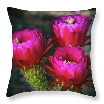 Throw Pillow featuring the photograph Hot Pink  by Saija Lehtonen