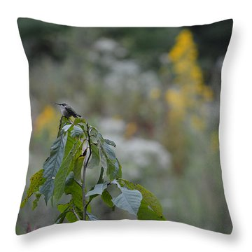 Humming Bird Throw Pillow by Linda Geiger