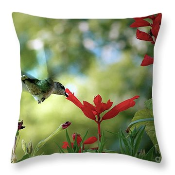 Hummingbird Delight Throw Pillow by Sue Stefanowicz