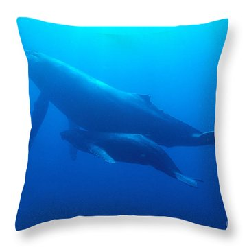 Humpback Mother And Calf Throw Pillow by Ed Robinson - Printscapes