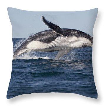 Humpback Whale Calf Breaching Throw Pillow